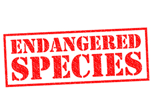 Ironwood-Consulting-Happy-Endangered-Species-Day